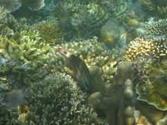 Snorkeling, Calambuyan Island