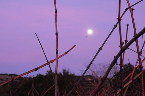 01072012: Wolf Moon with Dormant Vines