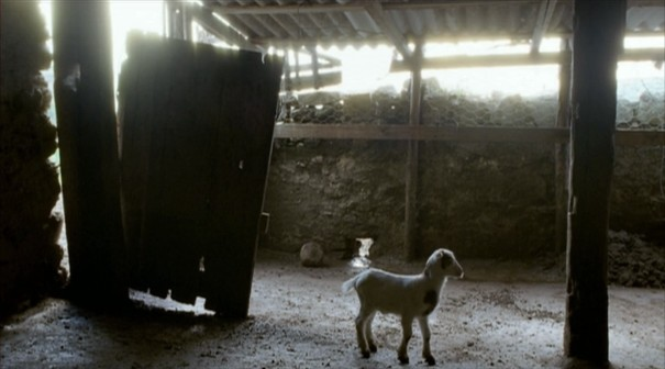 le quattro volte, frammartino, sheep, table, roy andersson, goat, kid, cute