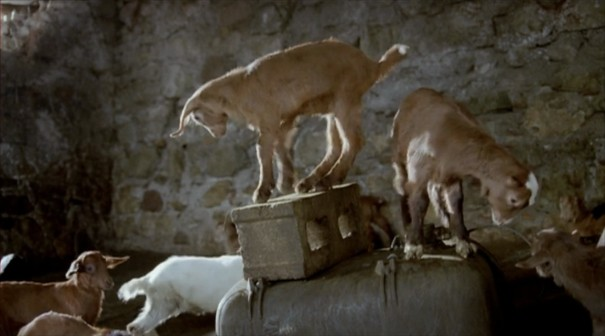 le quattro volte, frammartino, sheep, table, roy andersson, goat, kid