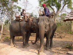 animal, adventure, indian elephant, elephant, elephants and mammoths, fauna, mahout, safari, wildlife,