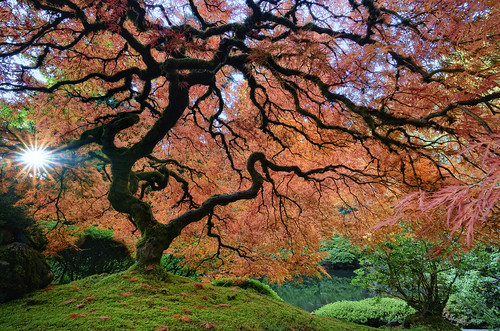 Japanese Garden - Portland OR by rlange4467
