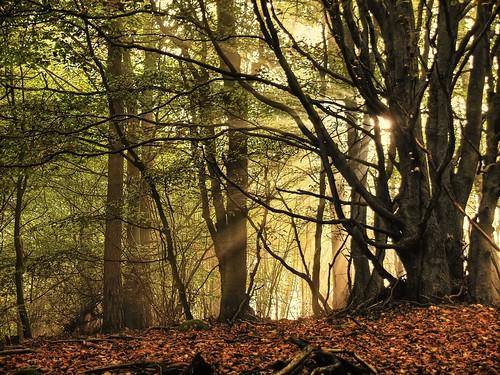 無料写真素材, 自然風景, 森林, 樹木, 薄明光線