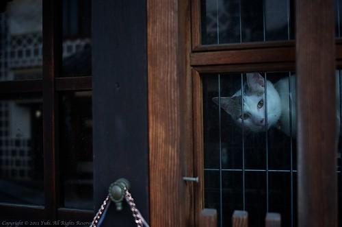 Cat@Okayama #2