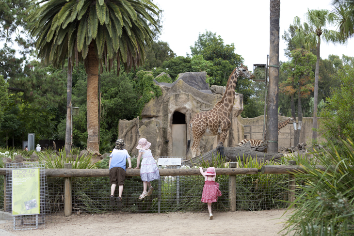 ... they found the giraffes