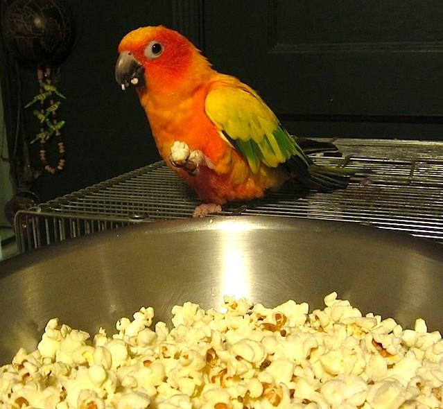 popcorn kodachrome_0708
