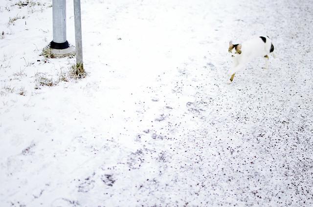 snö03