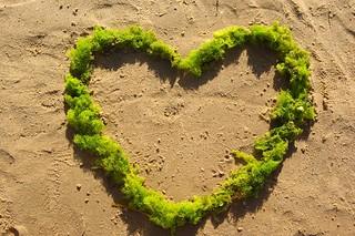Coeur algues