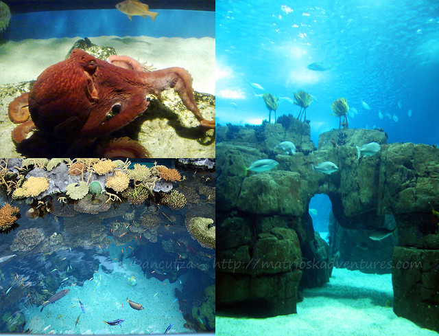 foto polpo e pesciolini esotici acquario lisbona