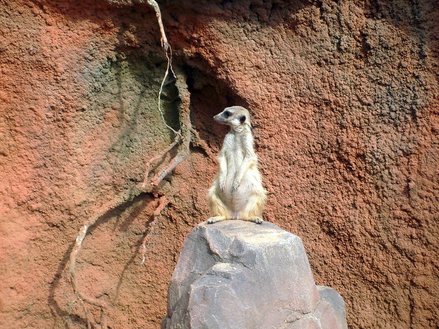 Zoo in Brno