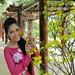 Phương Tuyền - Phù Sa