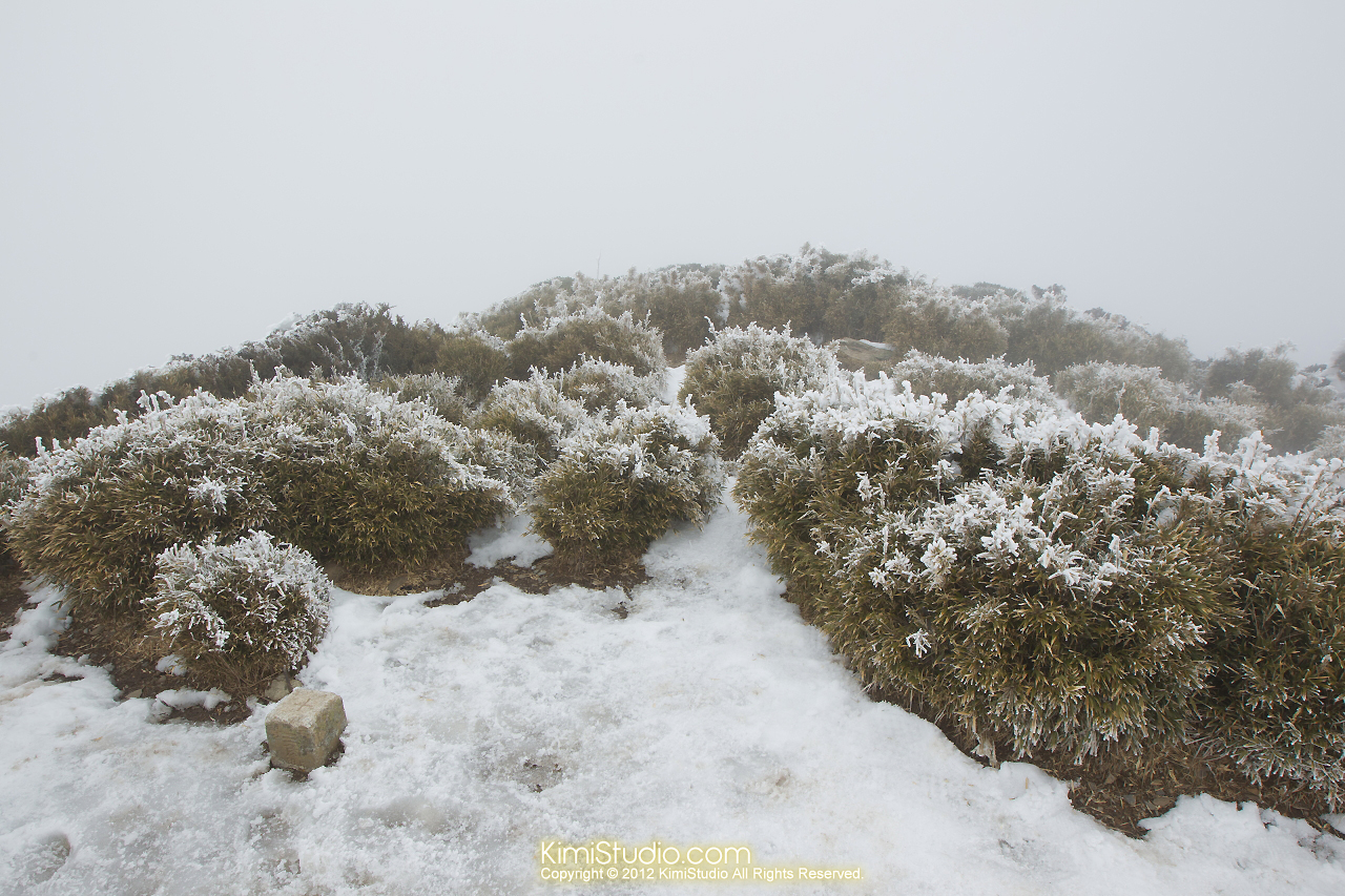 2012.01.31 Hohuan Mountain-048