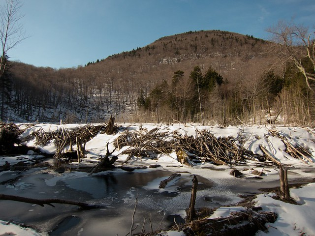 Beaver dam and pond below Pecoy Notch