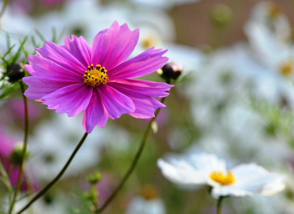 Winter Flowers In India Winter Flowers