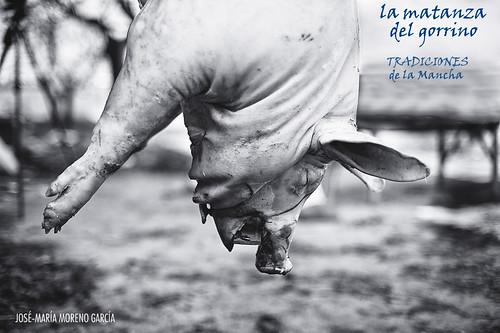 la matanza del gorrino : tradiciones de La Mancha by José-María Moreno García = FOTÓGRAFO HUMANISTA