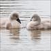 Couple Of Cuties by *ian*