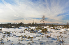 Alton Bog, Snowfall