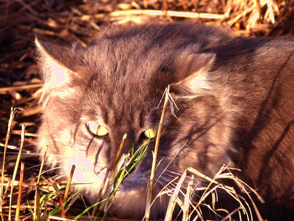 12-11-2011-cat-eyes