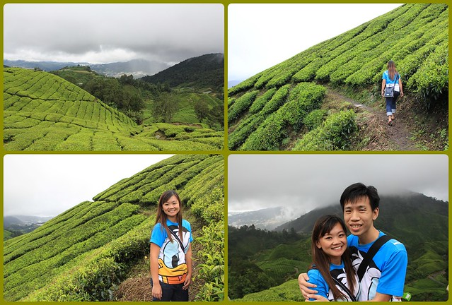 Tea Plantation Trek