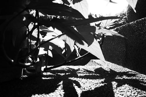 7/365。大雪日的豔陽