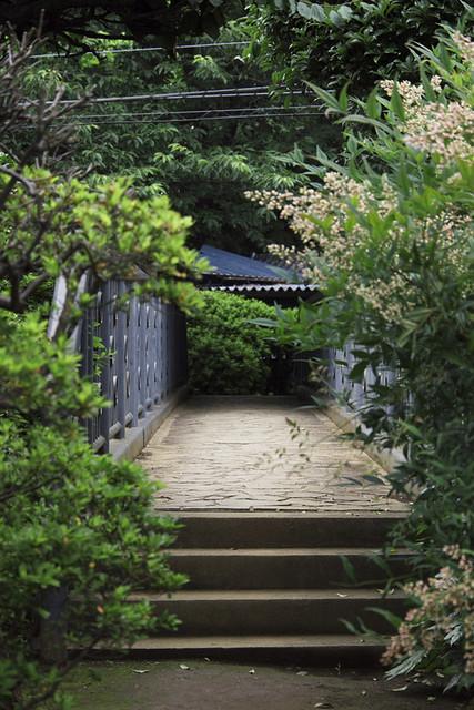 110612_134517_野菊のこみち