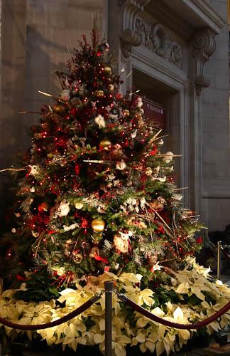 NMNH tree 2010.jpg