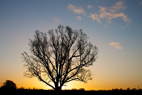 morning sun tree sunrise dawn alba sole albero