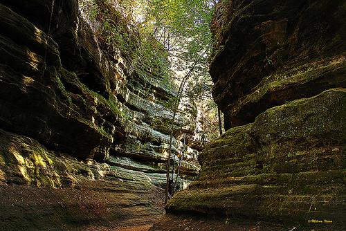 Rock's Beauty