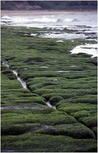 別誤會了,「老梅藻礁」不是真的藻礁。(張睿昇攝)