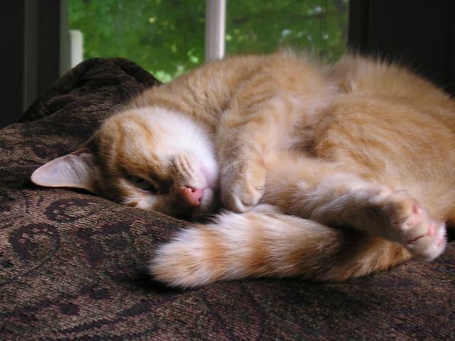 Tange napping