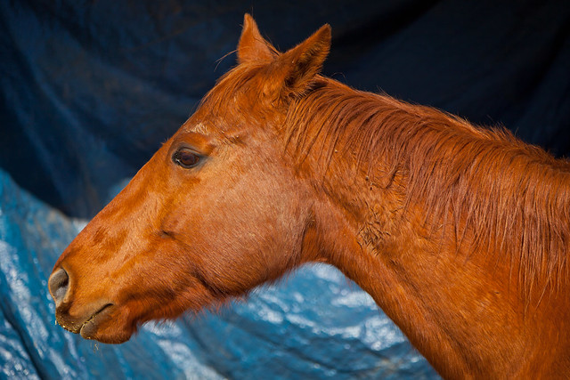 Horses 9752