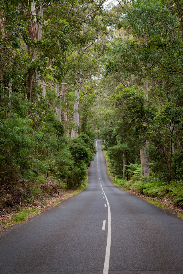 Road through Murramarang National Park, NSW, Australia