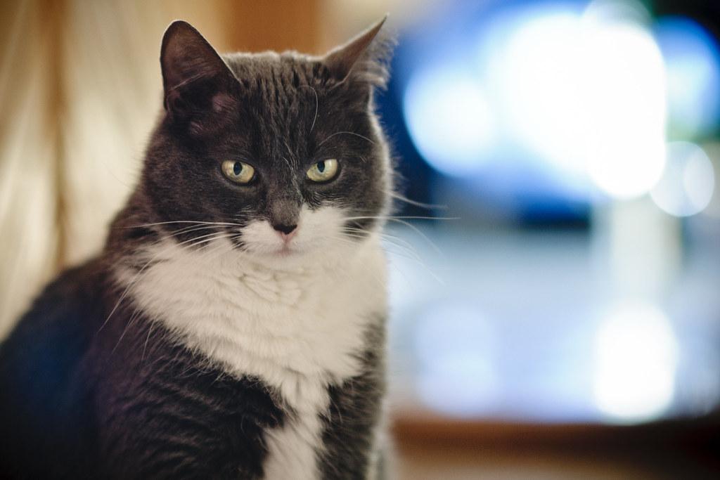 Cat #362/365