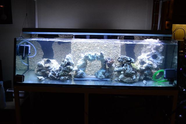 Luc's shallowreef tank 6588914561_0d6f7b6a3c_z