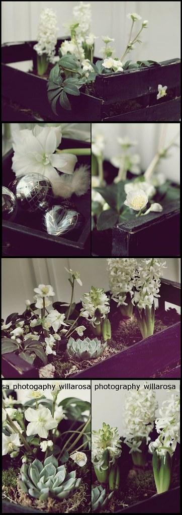 musta kukkalaatikkoVALMISt 005-vert