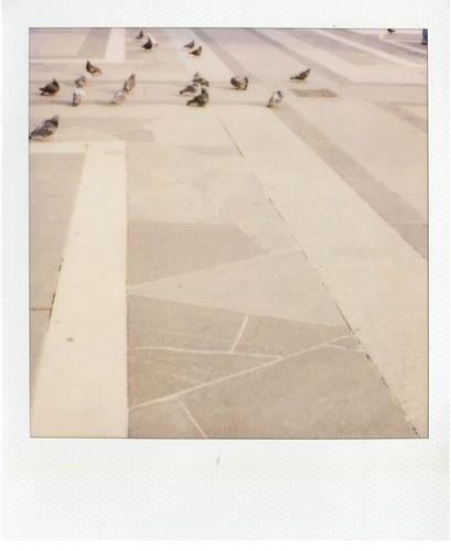 domo pigeons