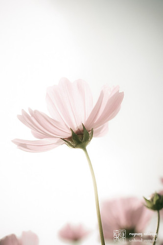 All_My_2011_30
