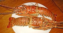 animal(0.0), crayfish(0.0), dungeness crab(0.0), homarus gammarus(0.0), spiny lobster(1.0), lobster(1.0), crustacean(1.0), seafood(1.0), homarus(1.0), food(1.0),