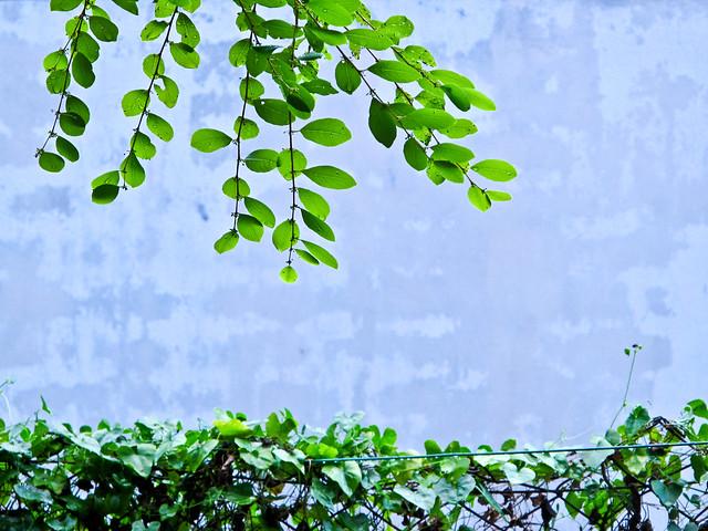 IMG_0829 Leaves