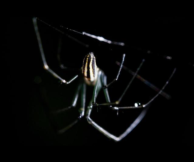 [macro] spider!