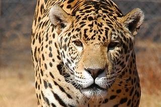 {Rhino & Lion Nature Reserve} Jaguar : 2