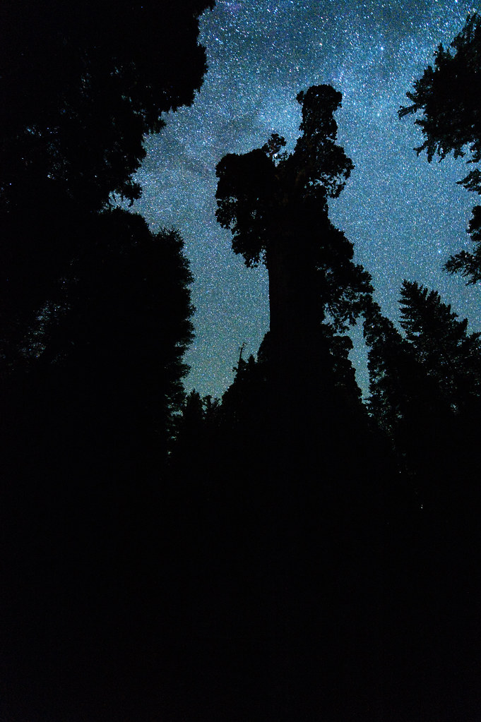 The Milky Way above the General Grant Tree (Kings Canyon National Park)