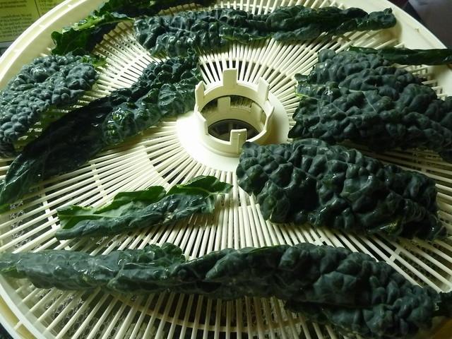 dehyd kale2.jpg