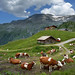 Austrian mountain farm at the foot of the Hintertux Glacier