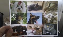 leuke kaart van de dierenarts