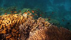 Marsa Alam: Pohádkový korálový svět v Rudém moři