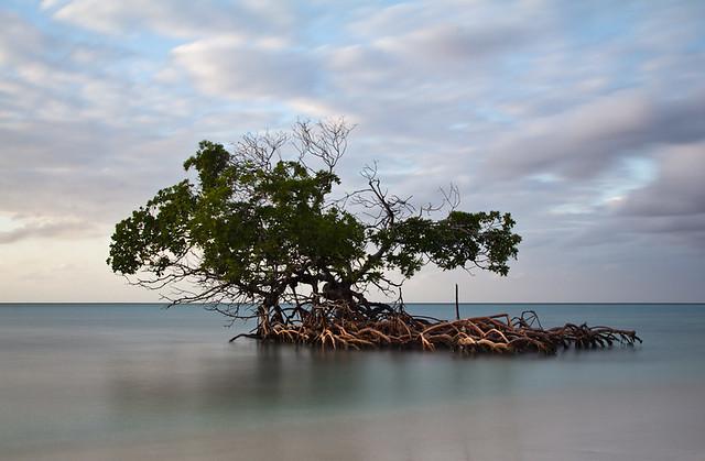 Mangrove at Cayo Levisa, par Franck Vervial