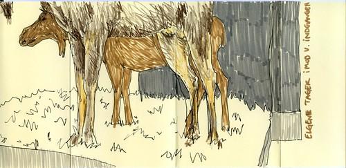 natmus - moose