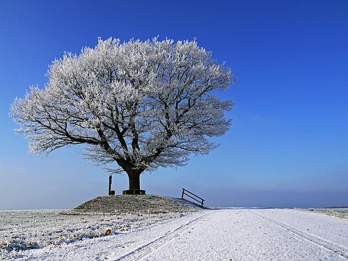 World of Winter by RainerSchuetz
