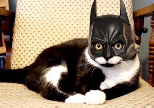 cat_bat